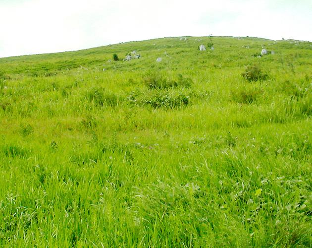 自然・風景のフリー背景素材、写真画像(ダウンロード13)