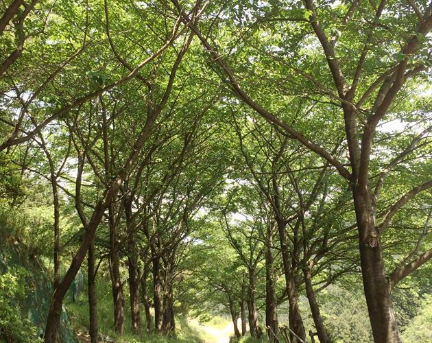 自然・風景のフリー背景素材、写真画像(ダウンロード18)