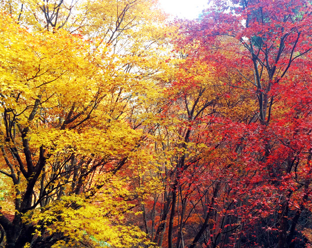 自然、風景写真(フリー素材)