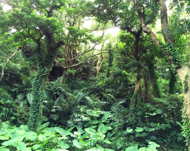 自然・風景のフリー背景素材、写真画像(ダウンロード24)