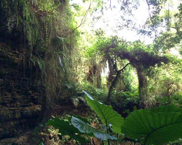 自然・風景のフリー背景素材、写真画像(ダウンロード27)