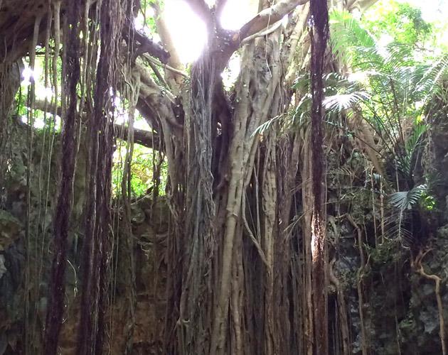 自然・風景のフリー背景素材、写真画像(ダウンロード30)