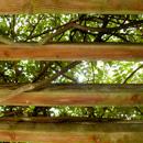 植物の写真 フリー(無料ダウンロード01)