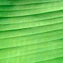 植物の写真 フリー(無料ダウンロード02)
