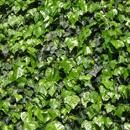植物の写真 フリー(無料ダウンロード03)