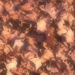 植物の写真 フリー(無料ダウンロード05)