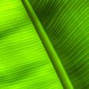 植物の写真 フリー(無料ダウンロード06)