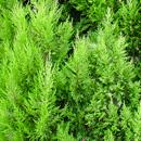 植物の写真 フリー(無料ダウンロード07)