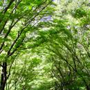 植物の写真 フリー(無料ダウンロード08)