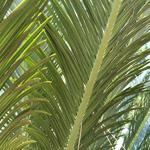 植物の写真 フリー(無料ダウンロード13)