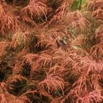 植物の写真 フリー(無料ダウンロード17)