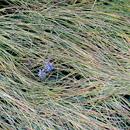 植物の写真 フリー(無料ダウンロード19)