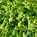 植物の写真 フリー(無料ダウンロード20)