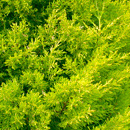 植物の写真 フリー(無料ダウンロード22)