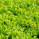 植物の写真 フリー(無料ダウンロード23)