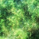 植物の写真 フリー(無料ダウンロード25)