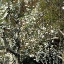 植物の写真 フリー(無料ダウンロード26)
