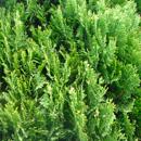 植物の写真 フリー(無料ダウンロード27)