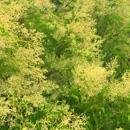 植物の写真 フリー(無料ダウンロード29)