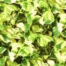 植物の写真 フリー(無料ダウンロード30)