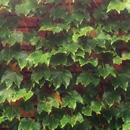植物の写真 フリー(無料ダウンロード31)