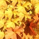 植物の写真 フリー(無料ダウンロード32)