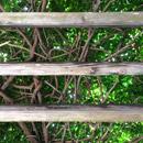 植物の写真 フリー(無料ダウンロード33)