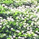 植物の写真 フリー(無料ダウンロード34)