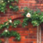 植物の写真 フリー(無料ダウンロード39)