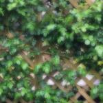 植物の写真 フリー(無料ダウンロード40)
