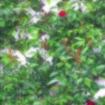 植物の写真 フリー(無料ダウンロード41)