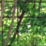 植物の写真 フリー(無料ダウンロード43)