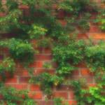 植物の写真 フリー(無料ダウンロード44)