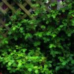 植物の写真 フリー(無料ダウンロード46)