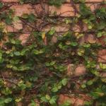 植物の写真 フリー(無料ダウンロード47)