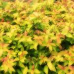植物の写真 フリー(無料ダウンロード48)