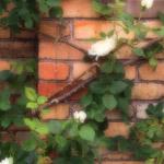 植物の写真 フリー(無料ダウンロード49)
