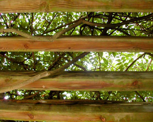 植物の写真-01(フリー素材)