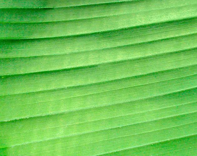 植物・葉・自然のフリー写真素材(ダウンロード02)
