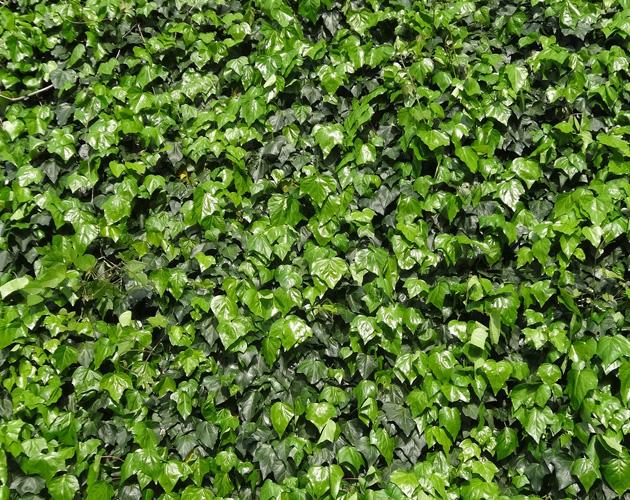 植物・葉・自然のフリー写真素材(ダウンロード03)