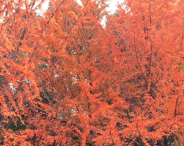 植物・葉・自然のフリー写真素材(ダウンロード04)