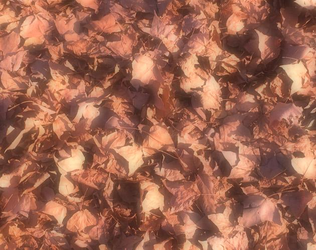 植物・葉・自然のフリー写真素材(ダウンロード05)