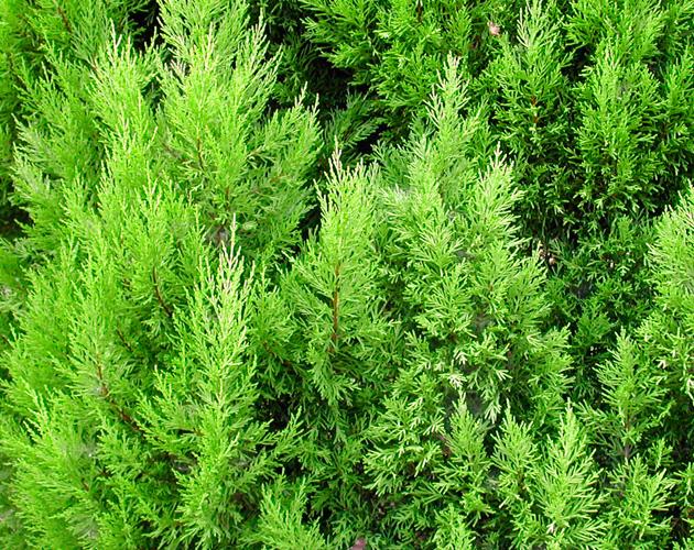 植物・葉・自然のフリー写真素材(ダウンロード07)