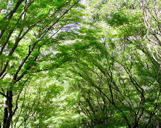 植物・葉・自然のフリー写真素材(ダウンロード08)