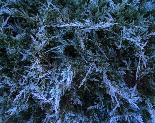 植物・葉・自然のフリー写真素材(ダウンロード12)