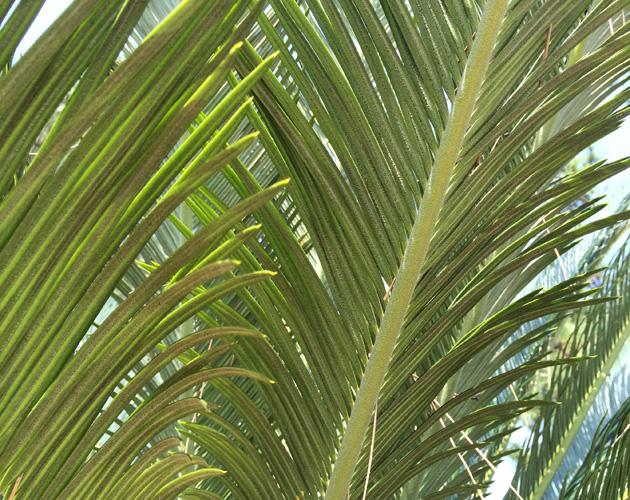植物の写真-13(フリー素材)