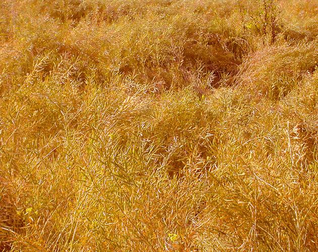 植物・葉・自然のフリー写真素材(ダウンロード14)