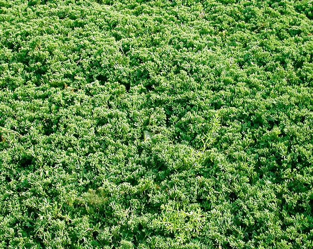 植物の写真-16(フリー素材)