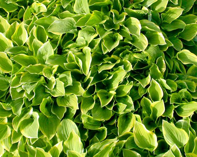 植物・葉・自然のフリー写真素材(ダウンロード18)