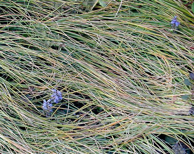 植物の写真-19(フリー素材)
